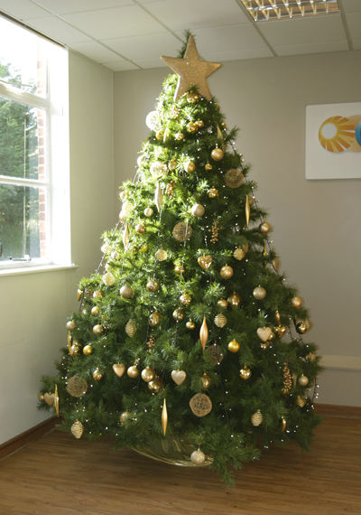 gallery - Christmas Tree Without Decorations